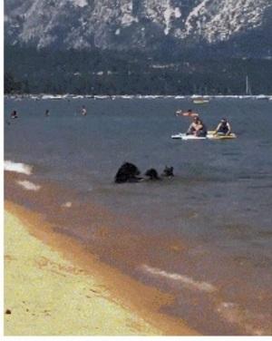 곰과 함께하는 여름휴가 ㅋㅋ
