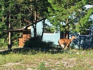 엄마 사슴이랑 애기 사슴