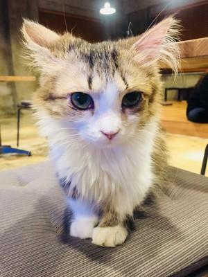 고양이카페