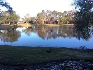 집앞 호수
