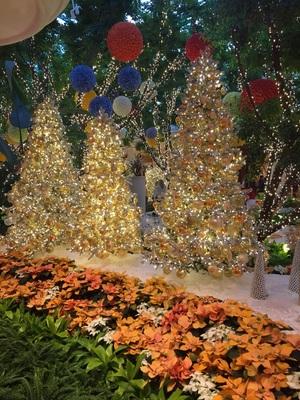 Happy Merry !!!
