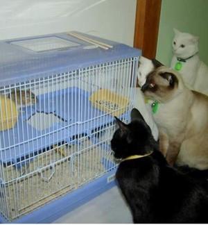 주시하고 있는 고양이들