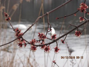 봄을 재촉하는 날씨..