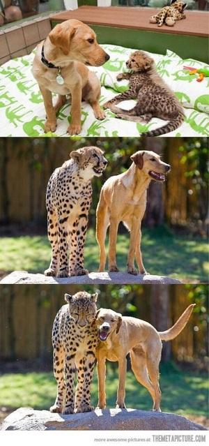 종을 초월한 우정