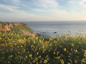 꽃과 바다, 그리고 바람~
