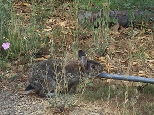 우리집에 사는 토끼