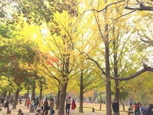남이섬의 가을