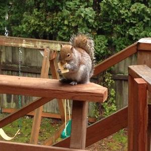 쿠키먹는 미쿡 다람쥐~~