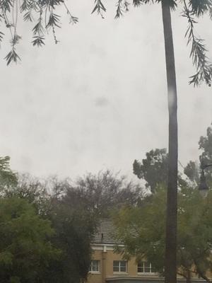 비가 와서 집 근처 나무가 넘어졌어요