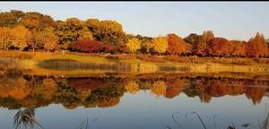 한국의 가을 -미쿡닷컴-