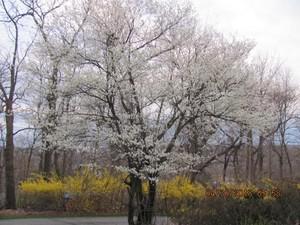 봄은 봄인데도 아직은 춥군요..