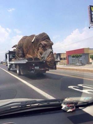 위험하게 안전장치도 없이 대형동물을 이동시키는 트럭